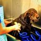 West Coast Veterinary Center - Sarasota, FL
