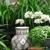 Moss Home & Garden