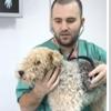 VCA Gwynedd Animal Hospital