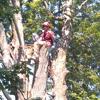 Weston Arborists