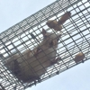 A & A Wildlife and Home Solutions