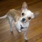 Humane Society of Bergen County - Lyndhurst, NJ