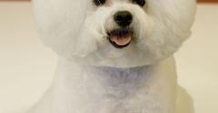 Miami's Pet Grooming - Miami, FL