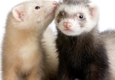 All About Pets - Citrus Heights, CA