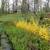 Ozark Gardens & Nursery Inc - CLOSED