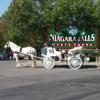 International Weddings & Carriage Rides