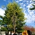 Joe Marra Tree Service