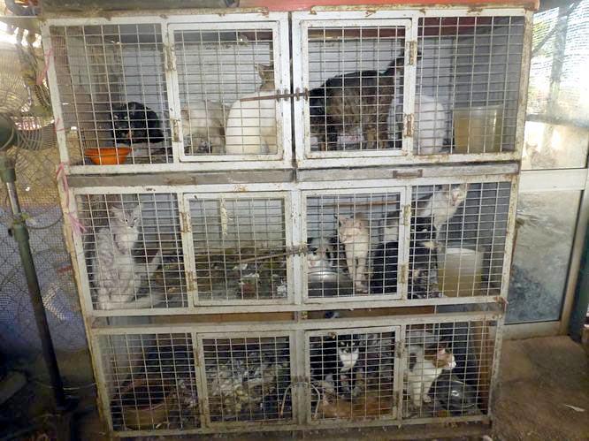 Hotel For Dogs Cats 4110 Creighton Rd Pensacola Fl 32504 Yp Com