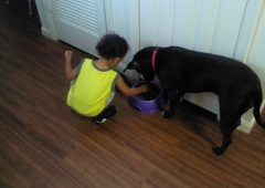 Heidis Legacy Dog Rescue Inc - Lithia, FL