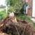 Tree Service Springfield MA