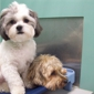 Best Friends Pet Care - Rockville, MD