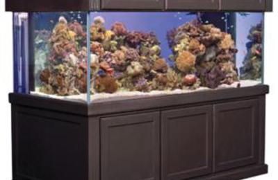 Natures Best Fish - Vestal, NY