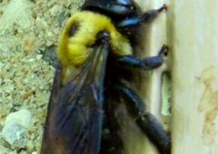Perry's Pest Control - Paducah, KY