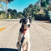 Camp Canine Doggie Daycare Country Club & Spa