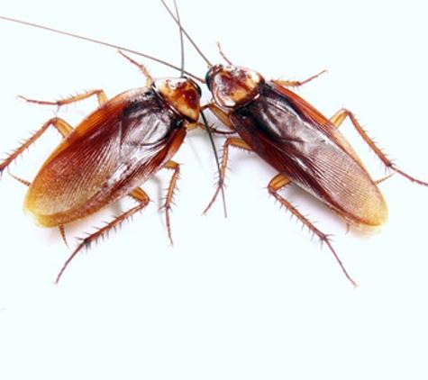 Advance Pest Control - Patchogue, NY