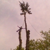Jim's Tree Service & Landscaping