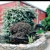 Redmill Landscape & Nursery