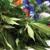 Alpenglow Premium Cannabis- Dillon