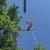 Pridemark Tree Services, LLC