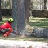 Dodge Tree Service