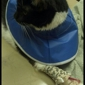 Harper Woods Veterinary Hospital - Harper Woods, MI. Figaro at the hospital with his IV lock and lobster bibb