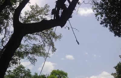 Foster's Lawn and Tree Service - Daytona Beach, FL