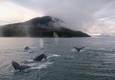 Alaska Travel & Transportation - Juneau, AK