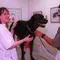 Belmont Pet Hospital - Belmont, CA