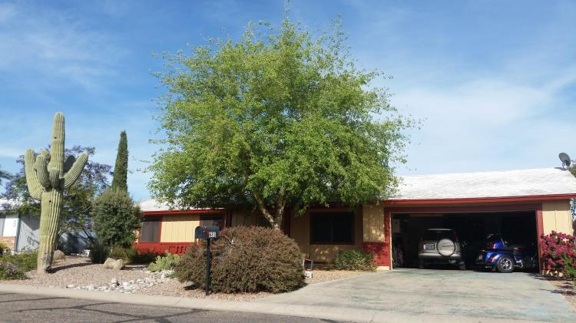 TDR Tree Services - Mesa, AZ. Sissoo Tree Before Trimming in Mesa Arizona