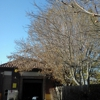 4 trees landscaping and tree service