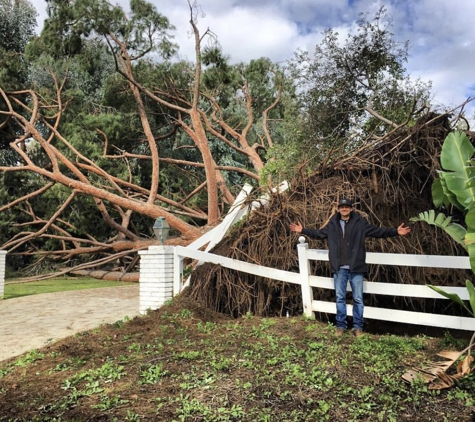 Adolfo Tree Service - Houston, TX. Fallen tree in Houston Texas call today for affordable tree service near you