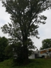 Sometimes even the most tall and beautiful trees have to go when they are unsafe and hazarding a home