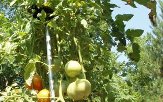 Top Garden Supplies In Saint Louis, MO