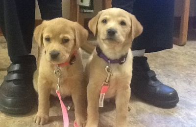 Northwest Animal Hospital - Columbus, OH. Libby Lou and Sadie Sue