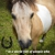 Howey Horse Haven Rescue