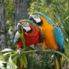 Animal Talk Caregiving