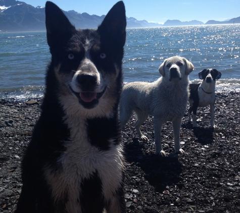 Seward Pet Lodge - seward, AK