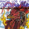 Mariachi Los Gallitos del Sur