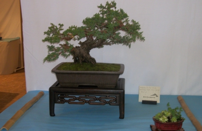 Ron Anderson Bonsai - santa cruz, CA