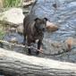 Tahoe Pet Sitters - South Lake Tahoe, CA