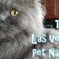 The Las Vegas Pet Nanny - Las Vegas, NV