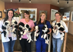 Black Canyon Veterinary Clinic - Montrose, CO