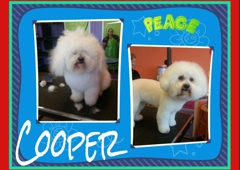 Peace Paws Grooming Salon And Doggie Daycare 845 Sw Lemans Ln Lees