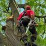 Specialist Tree Service - Houston, TX