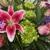 Di Bella Flowers & Gifts