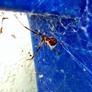 Already A Better Choice Termite & Pest Control Inc