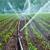 Midwest Lawn & Sprinkler
