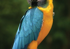Zoo Atlanta - Atlanta, GA