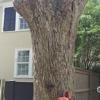 Joe Webster Tree Care