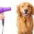 Canine Couture Pet Grooming